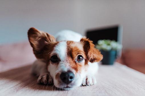 chien : la phytothérapie pour améliorer leur santé