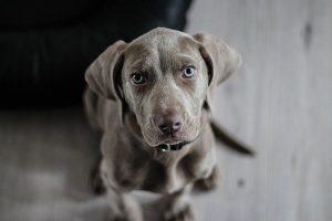 Prendre soin de son chien avec la phytothérapie