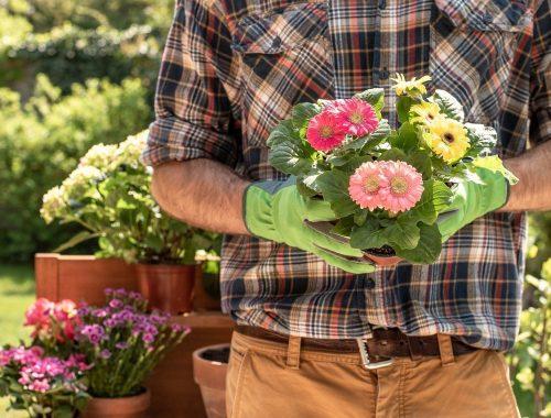 entretenir les fleurs